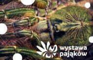 Wystawa pająków | wystawa